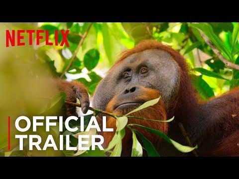 Our Planet | Official Trailer [HD] | Netflix
