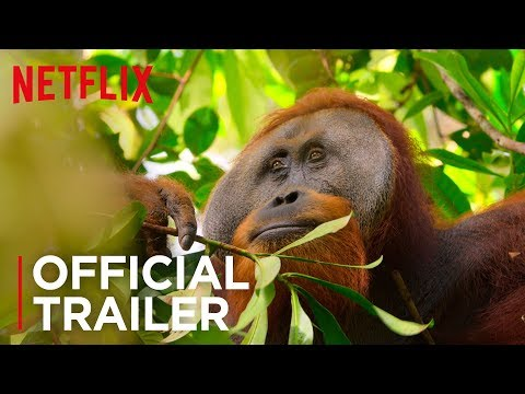 Our Planet | Official Teaser [HD] | Netflix