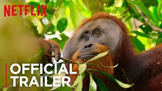 Our Planet   Official Trailer [HD]   Netflix