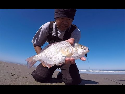 Surf Fishing The Oregon Coast - How To Setup A Rig And Catch Big Surf Perch