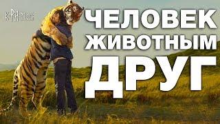Почему он его не съел? 10 невероятных историй о дружбе людей с дикими животными