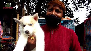 RECENT DOG PUPPY PRICE AT GALIFF STREET PET MARKET KOLKATA | CUTE DOG PUPPY | 17TH JAN 2021 VISIT