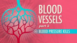 Blood Vessels, Part 2: Crash Course A&P #28