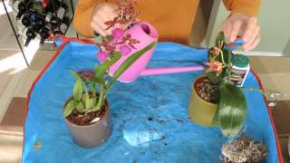 Watering Your Orchids