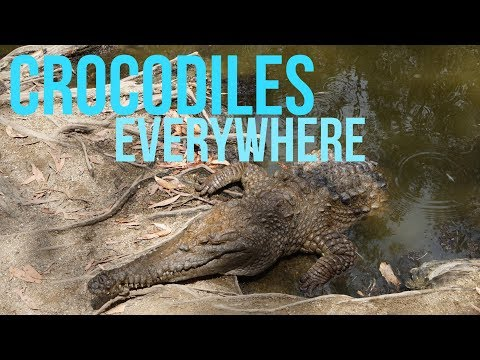 ON A BOAT SURROUNDED BY CROCODILES? | Hartley's Crocodile Adventures | Travel Vlogmas 4