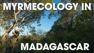 Ants in Madagascar! | Ants & Canopy Bootcamp 2019