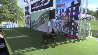Fetch It Winner - 2014 Purina® Pro Plan® Incredible Dog Challenge National Championships