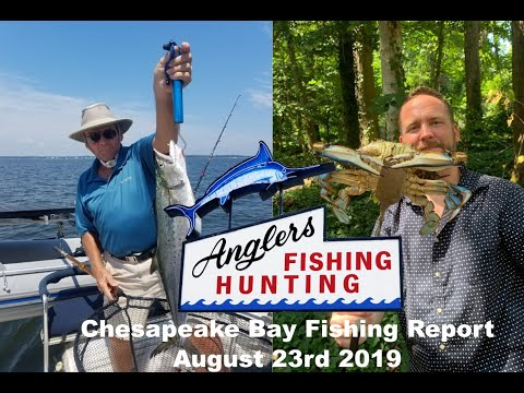 Chesapeake Bay Fishing Report-August 23rd 2019