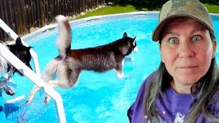 My Husky JUMPED In the Pool to Swim with Indy!