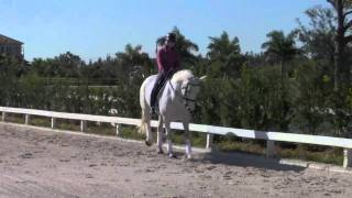 Rebus - PSG Gelding - FOR SALE ( SOLD to Para Olympian)
