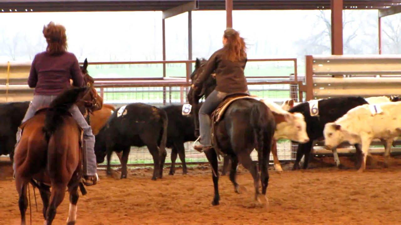 Valley View Ranch - Punkins Dakota - penning 1