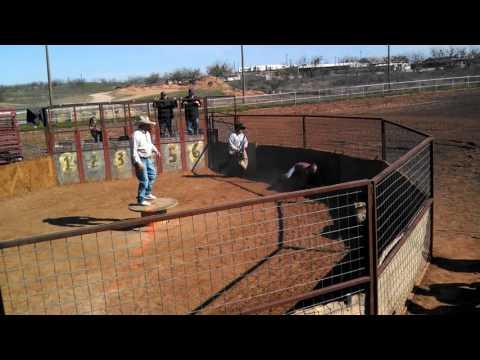 Pig chasing rattlesnake roundup Sweetwater Texas