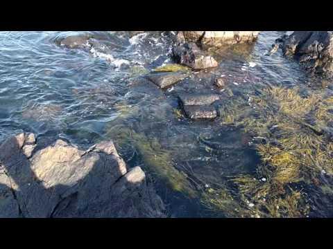 Biddeford Pool - Audubon Reserve