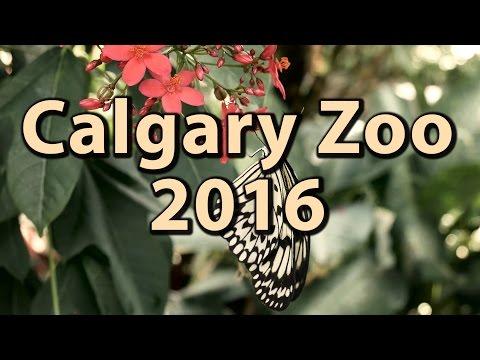 The Calgary Zoo 2016 in 4K | Journey Alberta