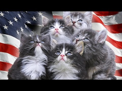 SO WHICH LITTLE KITTY IS GONNA RUN MY COUNTRY? | Cat President