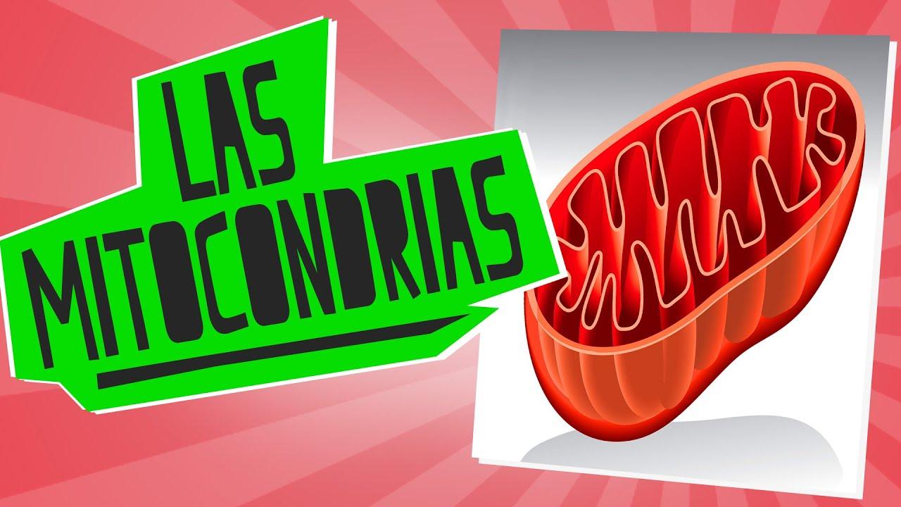 Las mitocondrias - Biología - Educatina - YouTube