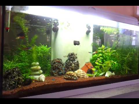 Aquarium 100 l youtube for Nourriture poisson rouge voile de chine