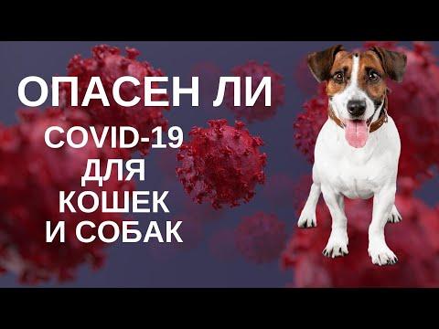 Вопрос: Как эффективно защитить собаку от заражения коронавирусом на прогулке?