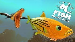 НОВАЯ РИФОВАЯ РЫБКА? ПРОХОЖДЕНИЕ   Feed and Grow Fish