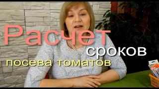 Расчет сроков посева семян томатов