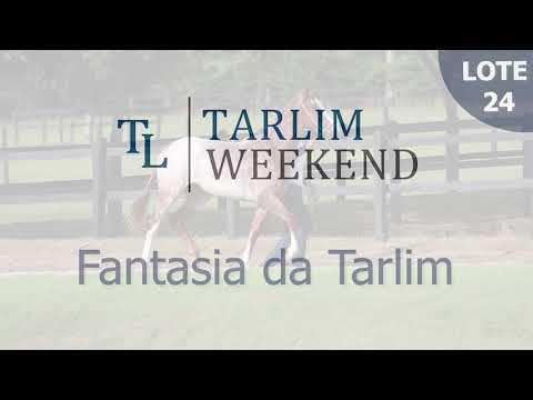 Lote 24 - Fantasia da Tarlim (6º Leilão Tarlim)