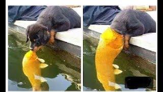 Смешные видео для собак и кошек | Попробуйте не смеяться! Самое интересное