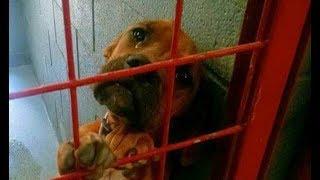 Все время плачущая собака была спасена одной сделанной фотографией, которая изменила её жизнь