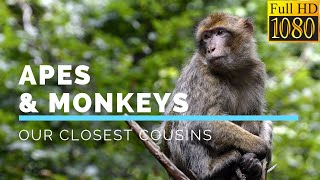 Apes & Monkeys: Our Closest Cousins in HD