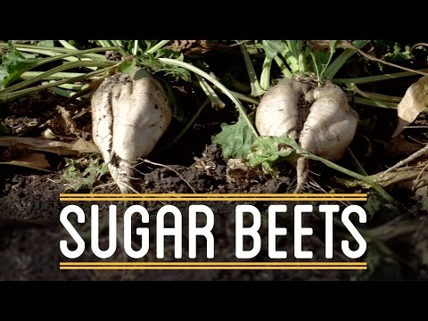Sugar Beets | How to Make Everything: Thanksgiving Dinner (2/5)