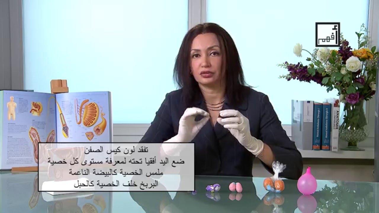 Alyaa Gad الفحص الذاتي للخصية Testicular Self Exam Youtube