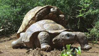 Tortoise gets frisky with our Spy Robot Tortoise