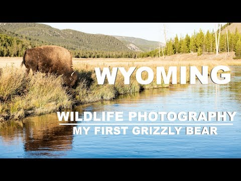 Wildlife Photography in Yellowstone National Park | My First Grizzly Bear | Grand Tetons