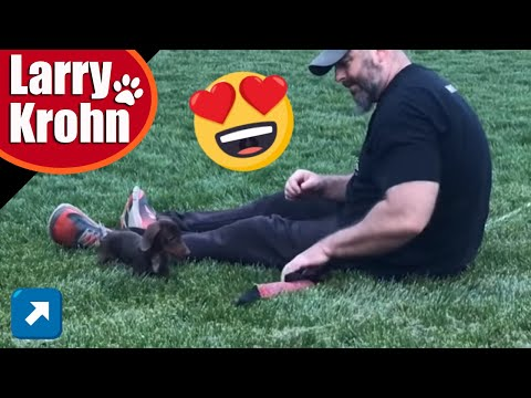 Cutest wiener dog learning to play