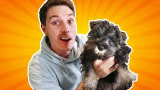 We Got A NEW Dog! (vlog)
