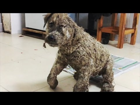 Thumbnail: Puppy Covered In Glue Left For Dead By Children Makes Miraculous Recovery