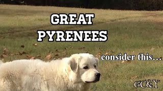 GREAT PYRENEES are wonderful family dogs HOWEVER consider this one possible drawback b4 getting 1