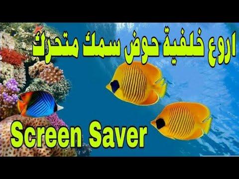 تحميل اروع خلفية حوض سمك 3d متحرك للكمبيوتر Youtube