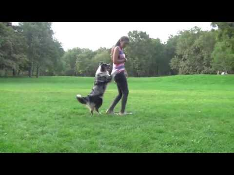 Dog Tricks 2 by Enya Australian Shepherd