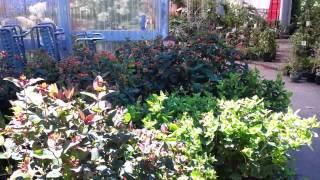 My Garden Nursery is open!