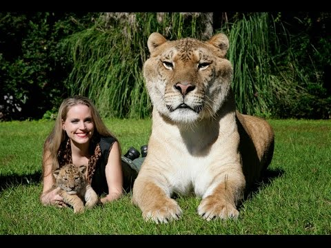 BIG CATS Deepest Secrets Lions,Tigers & Ligers national geographic documentary animals attack