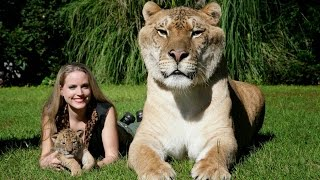 big cats deepest secrets lions tigers ligers national geographic documentary animals attack