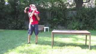 Chicago Dog Training / Hero The Pit Bull / From Shelter Dog To Super Dog