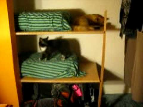 kitty bunk beds youtube