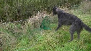 Ferreting Suffolk Hedges - East Anglian Pest Control