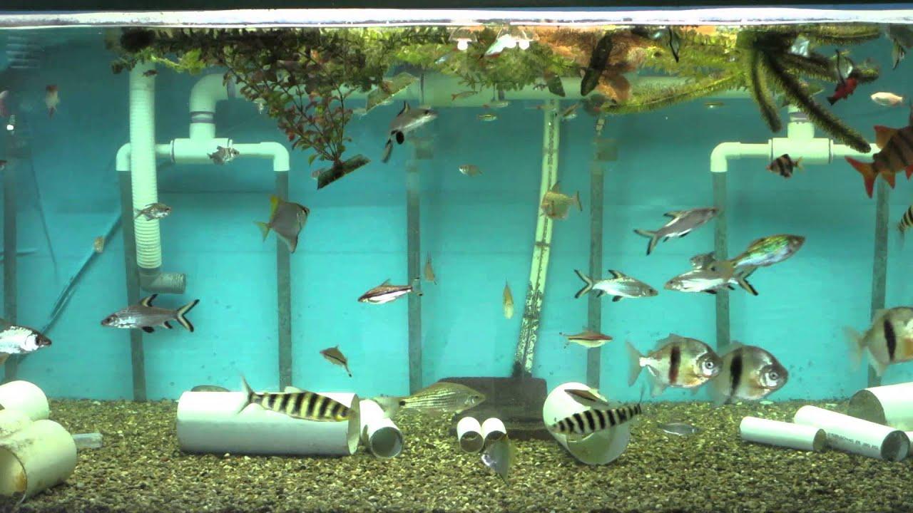 The big fish tank 625 gal tropical fish aquarium 4 jony3k for Huge fish tank
