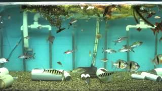 the big fish tank 625 gal tropical fish aquarium 4 jony3k