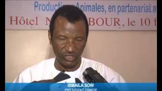 Les éleveurs Sénégalais perdent plus de 2 milliards Cfa par an dans le vol de bétails