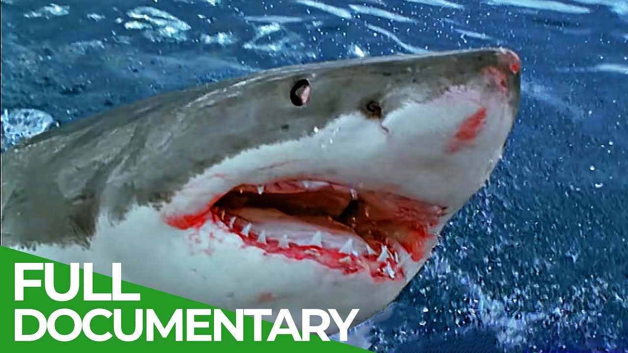 Sharks Attack - When Worst Fears Become Reality | Free Documentary Nature