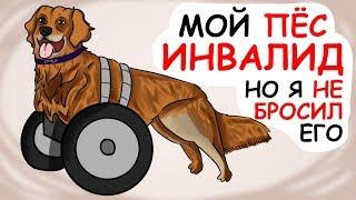 МОИ ДОМАШНИЕ ЖИВОТНЫЕ. Мой пёс инвалид. (анимация) // Истории из жизни