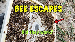 BEE ESCAPES - Did they work?
